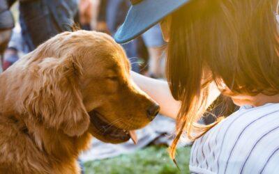 Pet Custody in Divorces